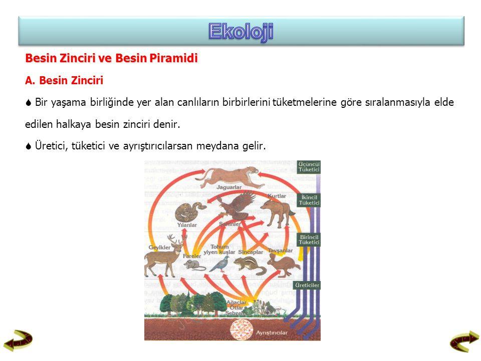 Besin Zinciri ve Besin Piramidi A. Besin Zinciri  Bir yaşama birliğinde yer alan canlıların birbirlerini tüketmelerine göre sıralanmasıyla elde edile