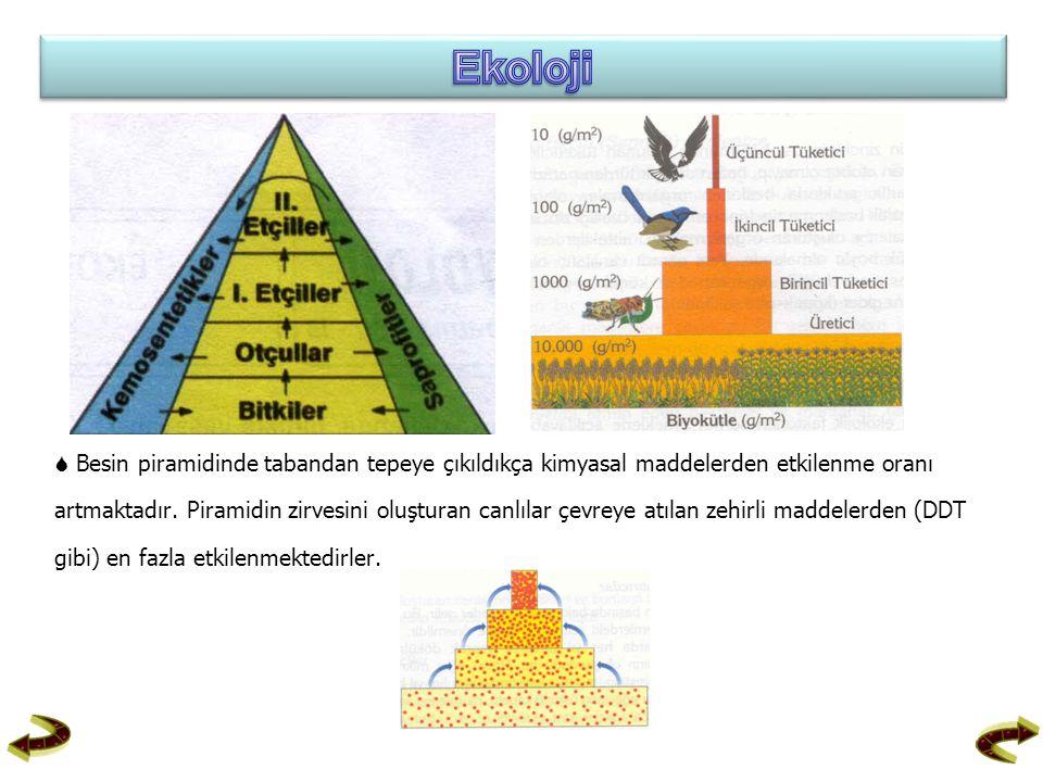  Besin piramidinde tabandan tepeye çıkıldıkça kimyasal maddelerden etkilenme oranı artmaktadır. Piramidin zirvesini oluşturan canlılar çevreye atılan