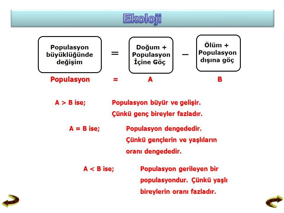 Populasyon = A B A > B ise; Populasyon büyür ve gelişir. Çünkü genç bireyler fazladır. A = B ise;Populasyon dengededir. Çünkü gençlerin ve yaşlıların