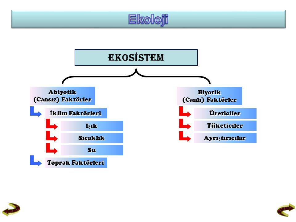 EKOS İ STEM Biyotik (Canlı) Faktörler (Canlı) Faktörler Abiyotik (Cansız) Faktörler (Cansız) Faktörler Üreticiler Tüketiciler Ayrı ş tırıcılar Ayrı ş