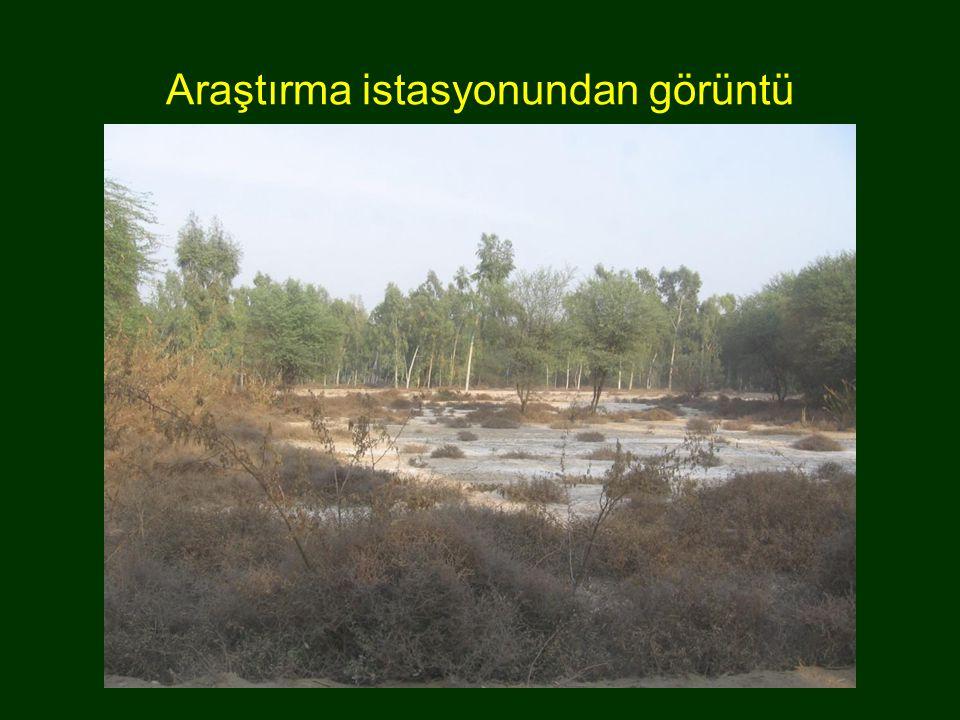 Araştırma istasyonundan görüntü