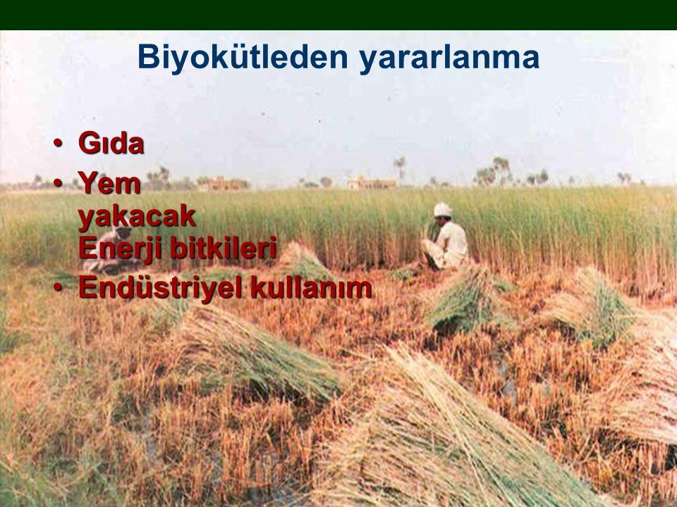 Biyokütleden yararlanma GıdaGıda Yem yakacak Enerji bitkileriYem yakacak Enerji bitkileri Endüstriyel kullanımEndüstriyel kullanım