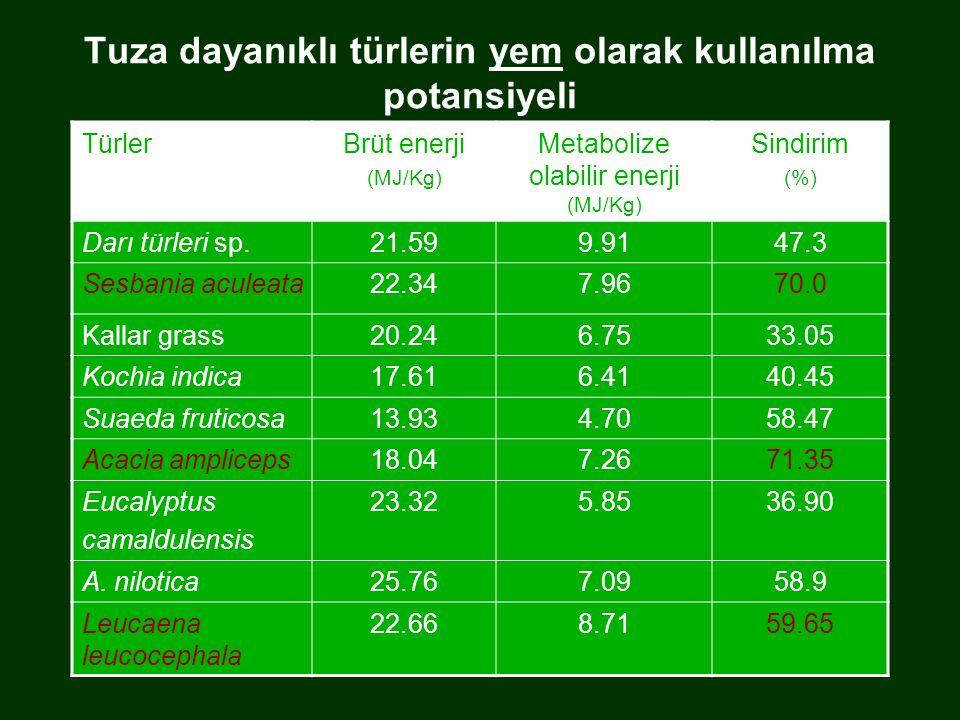 Tuza dayanıklı türlerin yem olarak kullanılma potansiyeli TürlerBrüt enerji (MJ/Kg) Metabolize olabilir enerji (MJ/Kg) Sindirim (%) Darı türleri sp.21.599.9147.3 Sesbania aculeata22.347.9670.0 Kallar grass20.246.7533.05 Kochia indica17.616.4140.45 Suaeda fruticosa13.934.7058.47 Acacia ampliceps18.047.2671.35 Eucalyptus camaldulensis 23.325.8536.90 A.