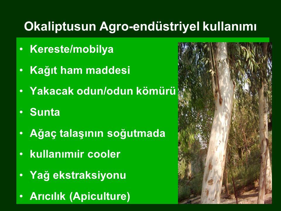 Okaliptusun Agro-endüstriyel kullanımı Kereste/mobilya Kağıt ham maddesi Yakacak odun/odun kömürü Sunta Ağaç talaşının soğutmada kullanımıir cooler Yağ ekstraksiyonu Arıcılık (Apiculture)