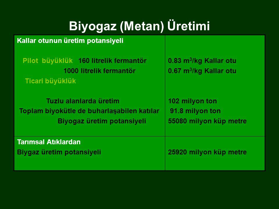 Biyogaz (Metan) Üretimi Kallar otunun üretim potansiyeli Pilot büyüklük 160 litrelik fermantör 1000 litrelik fermantör Ticari büyüklük Tuzlu alanlarda