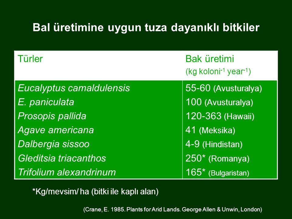 Bal üretimine uygun tuza dayanıklı bitkiler TürlerBak üretimi (kg koloni -1 year -1 ) Eucalyptus camaldulensis E.