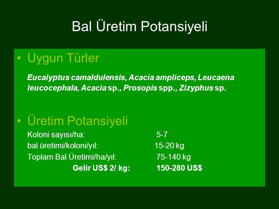 Bal Üretim Potansiyeli Uygun Türler Eucalyptus camaldulensis, Acacia ampliceps, Leucaena leucocephala, Acacia sp., Prosopis spp., Zizyphus sp. Üretim