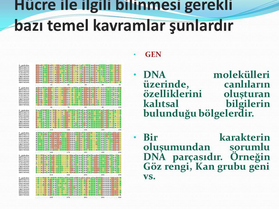 Hücre ile ilgili bilinmesi gerekli bazı temel kavramlar şunlardır GEN DNA molekülleri üzerinde, canlıların özelliklerini oluşturan kalıtsal bilgilerin