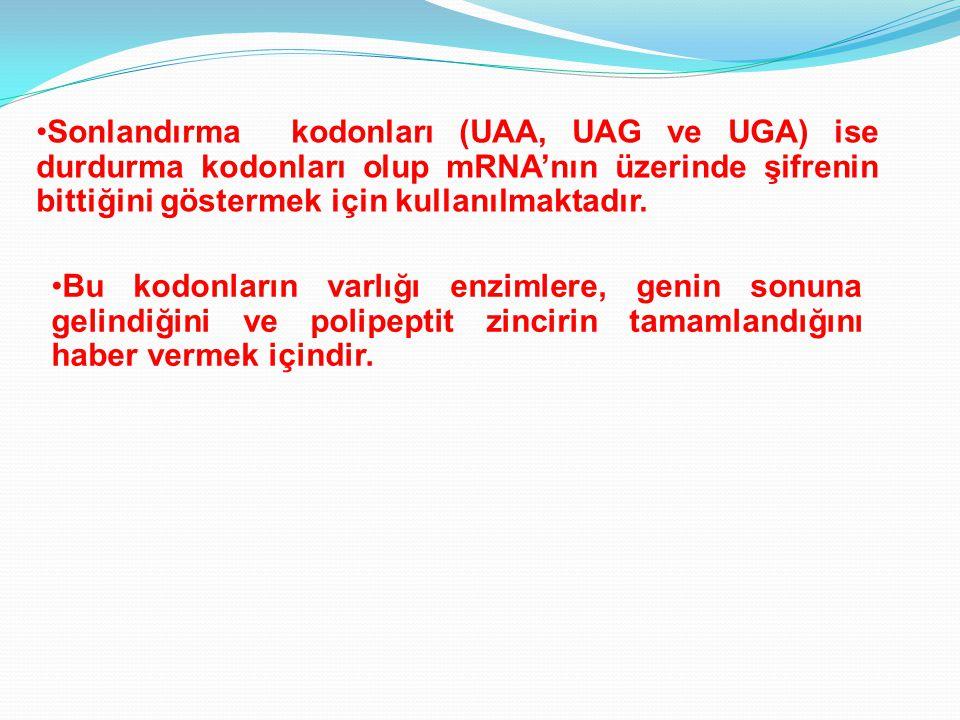 Sonlandırma kodonları (UAA, UAG ve UGA) ise durdurma kodonları olup mRNA'nın üzerinde şifrenin bittiğini göstermek için kullanılmaktadır. Bu kodonları