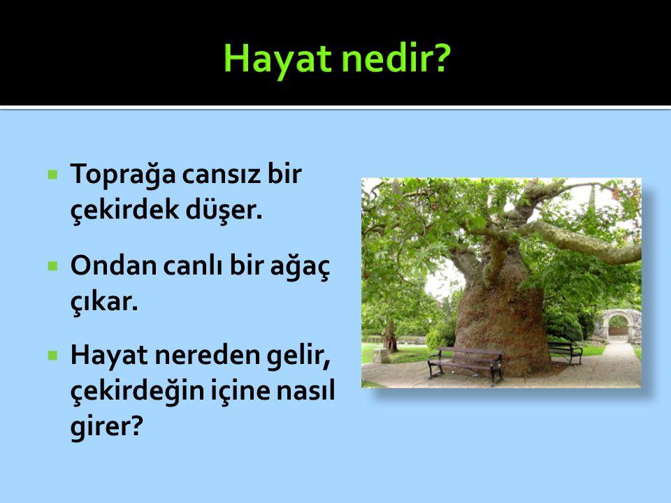  Toprağa cansız bir çekirdek düşer.  Ondan canlı bir ağaç çıkar.  Hayat nereden gelir, çekirdeğin içine nasıl girer?