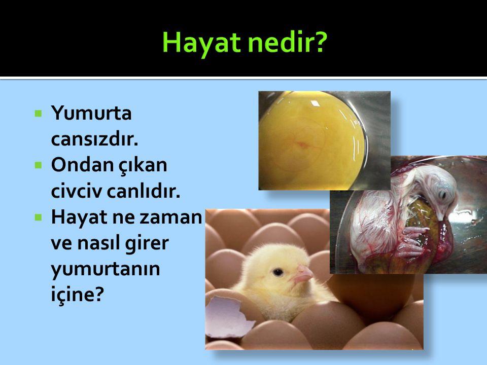  Yumurta cansızdır.  Ondan çıkan civciv canlıdır.  Hayat ne zaman ve nasıl girer yumurtanın içine?