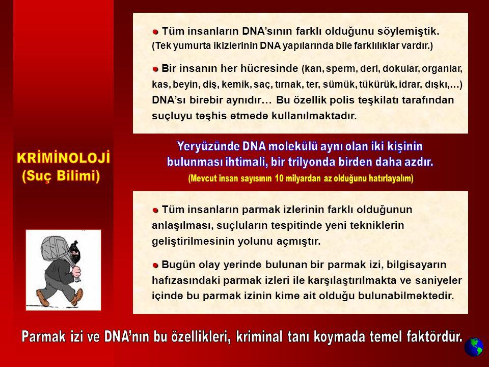 ● ● Tüm insanların DNA'sının farklı olduğunu söylemiştik. (Tek yumurta ikizlerinin DNA yapılarında bile farklılıklar vardır.) ● ● Bir insanın her hücr