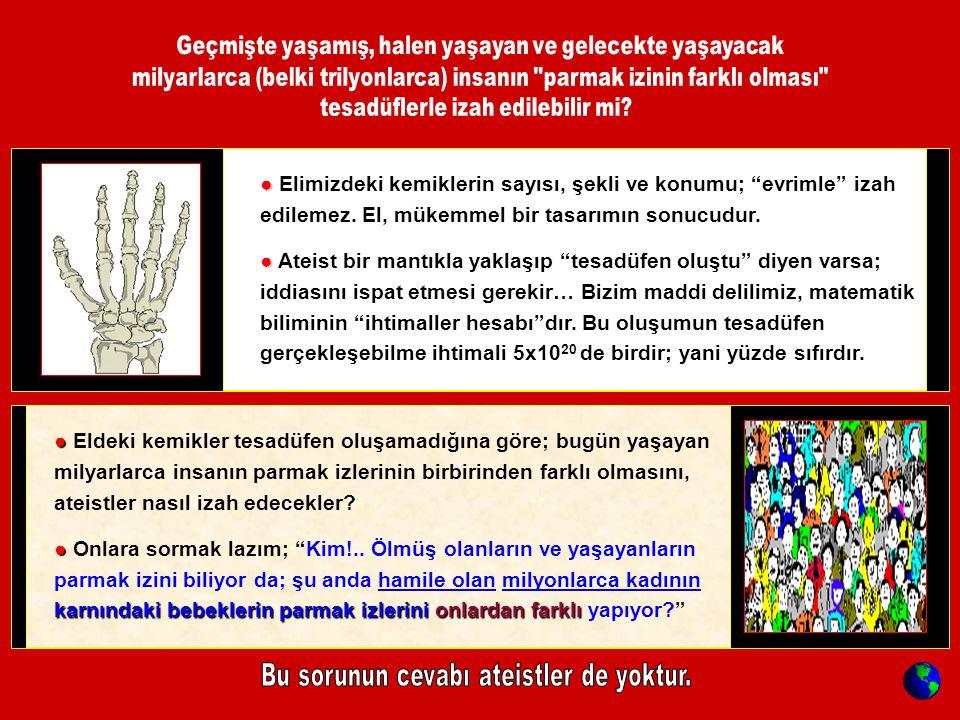 ● ● Elimizdeki kemiklerin sayısı, şekli ve konumu; evrimle izah edilemez.