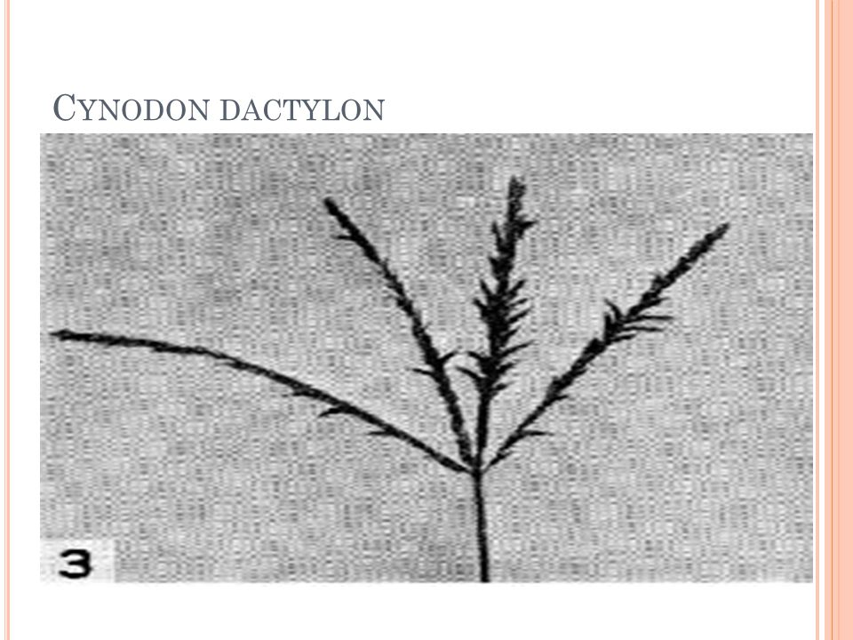 Tohum ekim zamanı olarak serin iklim çim bitkilerinde en uygun zaman sonbahar ayıdır.
