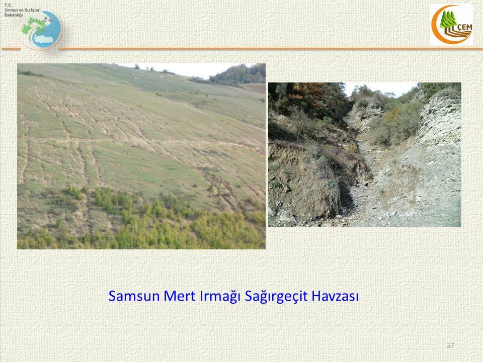 Samsun Mert Irmağı Sağırgeçit Havzası 37