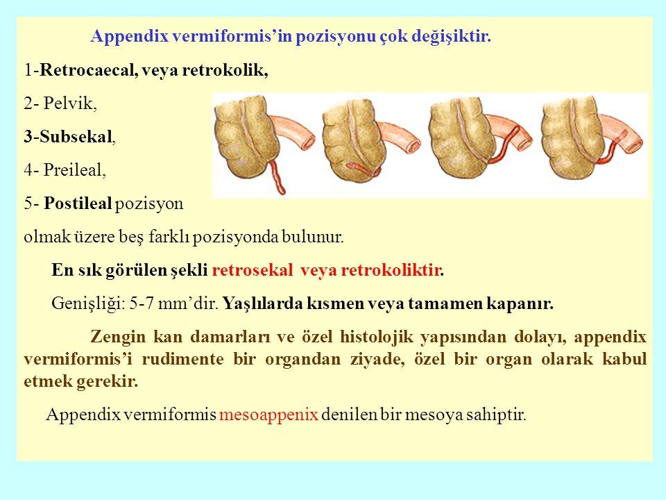 Appendix vermiformis'in pozisyonu çok değişiktir. 1-Retrocaecal, veya retrokolik, 2- Pelvik, 3-Subsekal, 4- Preileal, 5- Postileal pozisyon olmak üzer