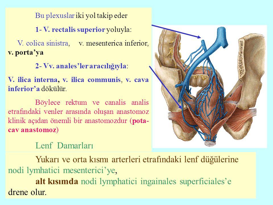 Bu plexuslar iki yol takip eder 1- V. rectalis superior yoluyla: V. colica sinistra, v. mesenterica inferior, v. porta'ya 2- Vv. anales'ler aracılığıy