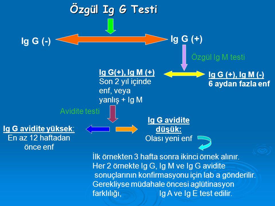 Özgül Ig G Testi Özgül Ig G Testi Ig G (-) Ig G (+) Ig G (+), Ig M (-) 6 aydan fazla enf Ig G(+), Ig M (+) Son 2 yıl içinde enf, veya yanlış + Ig M Ig