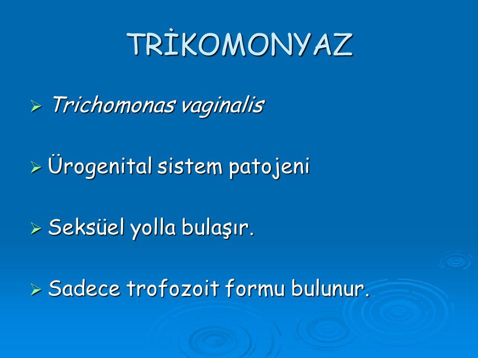 TRİKOMONYAZ  Trichomonas vaginalis  Ürogenital sistem patojeni  Seksüel yolla bulaşır.  Sadece trofozoit formu bulunur.