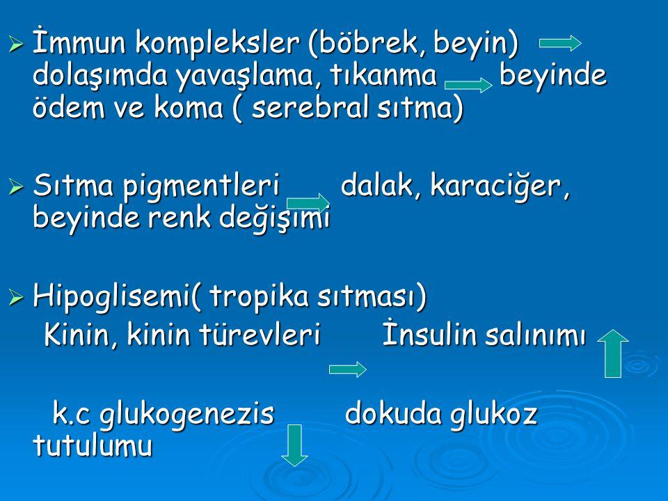  İmmun kompleksler (böbrek, beyin) dolaşımda yavaşlama, tıkanma beyinde ödem ve koma ( serebral sıtma)  Sıtma pigmentleri dalak, karaciğer, beyinde