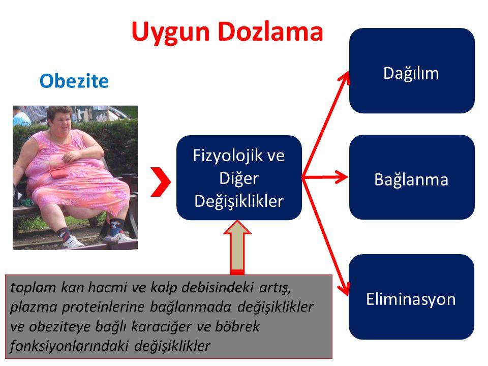 Uygun Dozlama Fizyolojik ve Diğer Değişiklikler Dağılım Bağlanma Eliminasyon toplam kan hacmi ve kalp debisindeki artış, plazma proteinlerine bağlanmada değişiklikler ve obeziteye bağlı karaciğer ve böbrek fonksiyonlarındaki değişiklikler Obezite