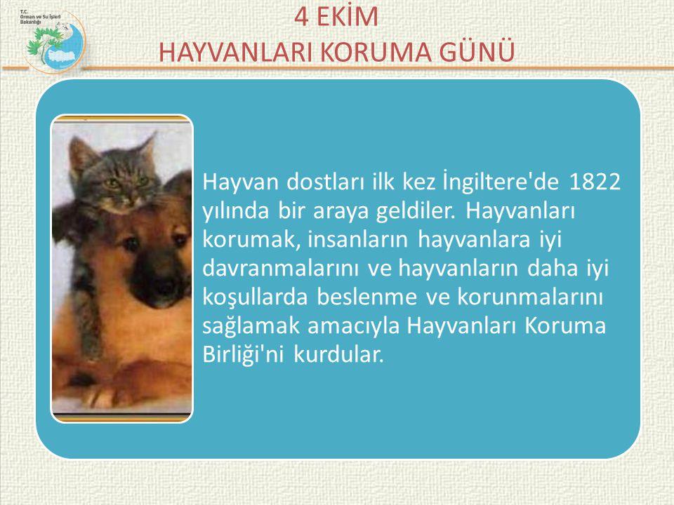 4 EKİM HAYVANLARI KORUMA GÜNÜ Yurdumuzda Hayvanları Koruma Derneği 1908 yılında kuruldu.