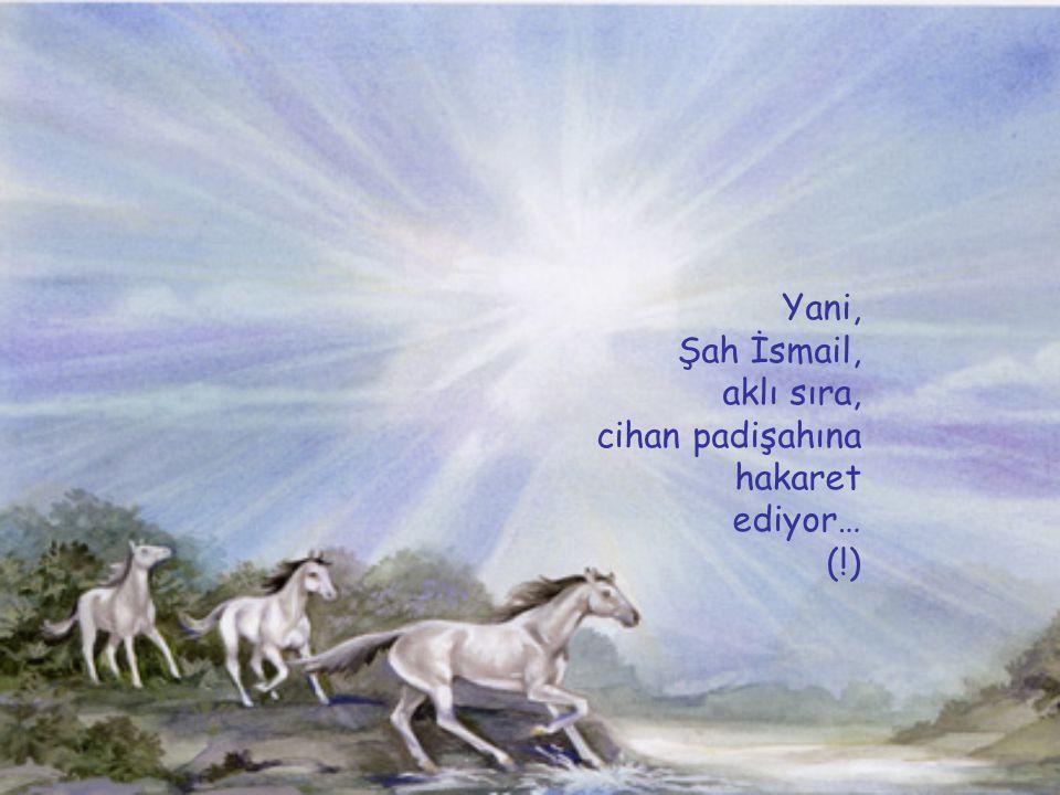 Yani, Şah İsmail, aklı sıra, cihan padişahına hakaret ediyor… (!)