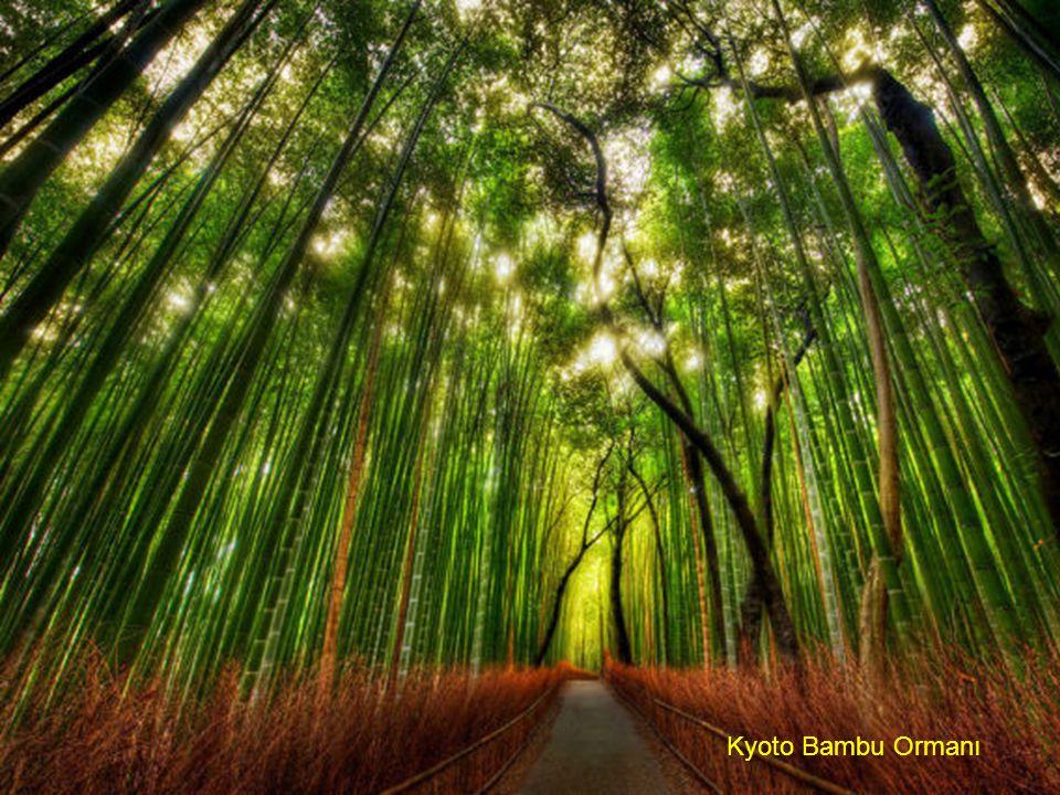 Kyoto Bambu Ormanı