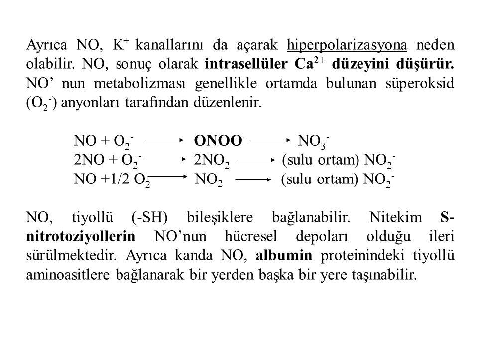 Ayrıca NO, K + kanallarını da açarak hiperpolarizasyona neden olabilir. NO, sonuç olarak intrasellüler Ca 2+ düzeyini düşürür. NO' nun metabolizması g