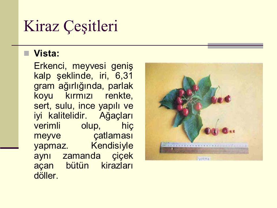 Kiraz Çeşitleri Vista: Erkenci, meyvesi geniş kalp şeklinde, iri, 6,31 gram ağırlığında, parlak koyu kırmızı renkte, sert, sulu, ince yapılı ve iyi kalitelidir.