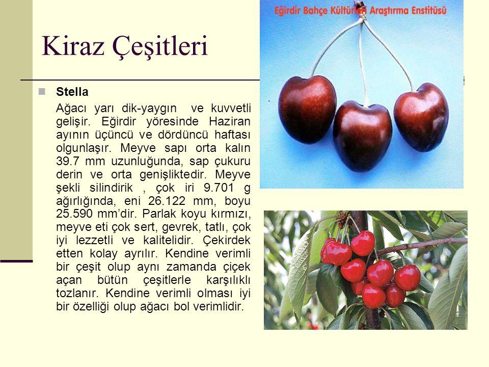 Kiraz Çeşitleri Stella Ağacı yarı dik-yaygın ve kuvvetli gelişir. Eğirdir yöresinde Haziran ayının üçüncü ve dördüncü haftası olgunlaşır. Meyve sapı o