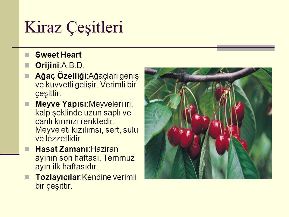 Kiraz Çeşitleri Sweet Heart Orijini:A.B.D. Ağaç Özelliği:Ağaçları geniş ve kuvvetli gelişir. Verimli bir çeşittir. Meyve Yapısı:Meyveleri iri, kalp şe