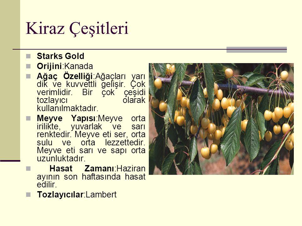 Kiraz Çeşitleri Starks Gold Orijini:Kanada Ağaç Özelliği:Ağaçları yarı dik ve kuvvettli gelişir. Çok verimlidir. Bir çok çeşidi tozlayıcı olarak kulla