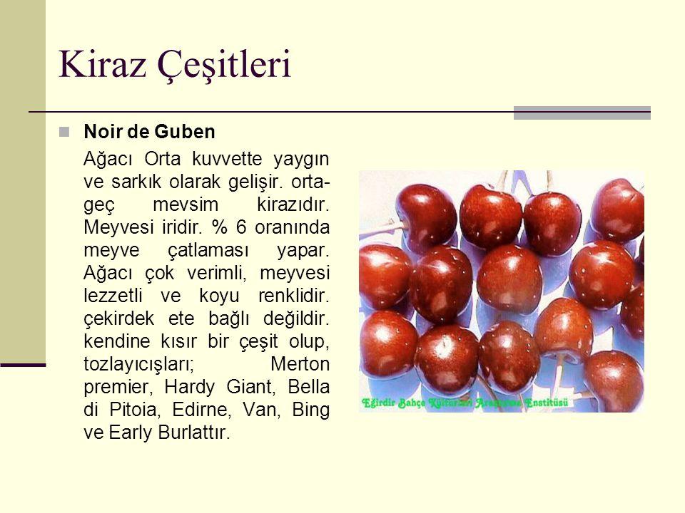 Kiraz Çeşitleri Noir de Guben Ağacı Orta kuvvette yaygın ve sarkık olarak gelişir. orta- geç mevsim kirazıdır. Meyvesi iridir. % 6 oranında meyve çatl