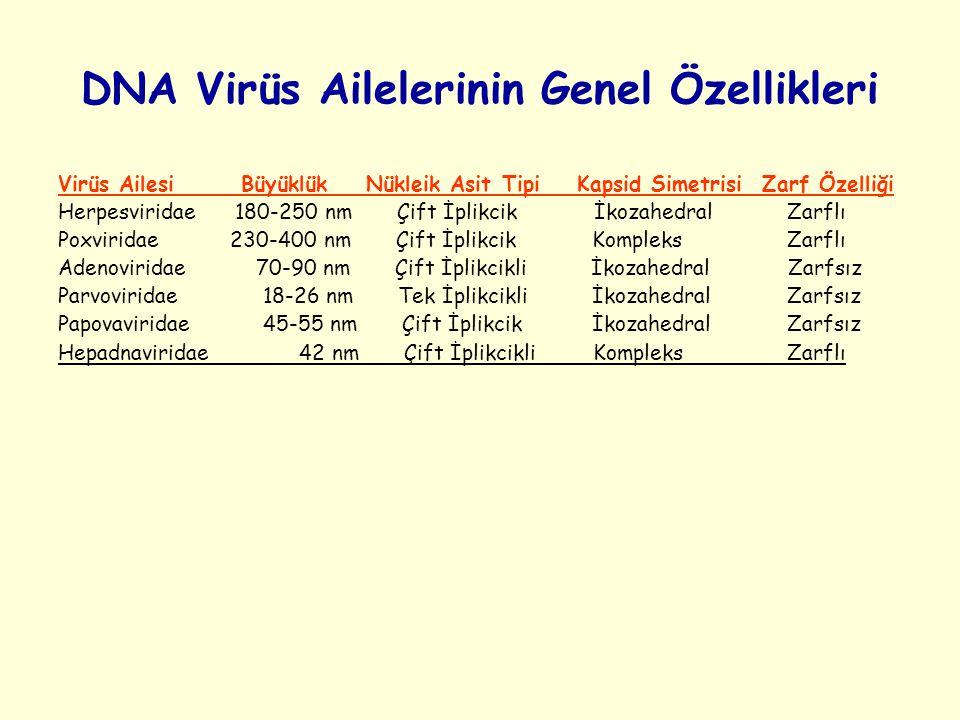 DNA Virüs Ailelerinin Genel Özellikleri Virüs Ailesi Büyüklük Nükleik Asit Tipi Kapsid Simetrisi Zarf Özelliği Herpesviridae 180-250 nm Çift İplikcik İkozahedral Zarflı Poxviridae 230-400 nm Çift İplikcik Kompleks Zarflı Adenoviridae 70-90 nm Çift İplikcikli İkozahedral Zarfsız Parvoviridae 18-26 nm Tek İplikcikli İkozahedral Zarfsız Papovaviridae 45-55 nm Çift İplikcik İkozahedral Zarfsız Hepadnaviridae 42 nm Çift İplikcikli Kompleks Zarflı