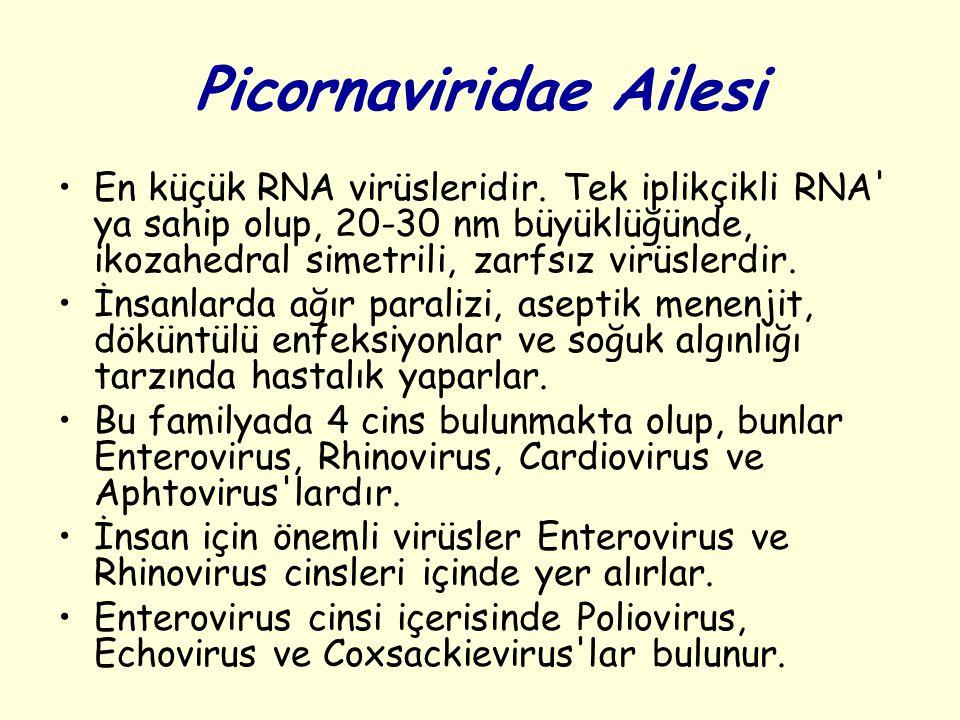 Picornaviridae Ailesi En küçük RNA virüsleridir.