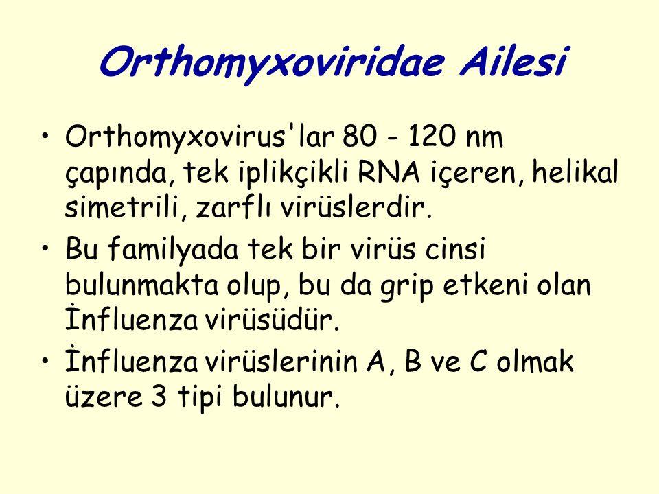 Orthomyxoviridae Ailesi Orthomyxovirus lar 80 - 120 nm çapında, tek iplikçikli RNA içeren, helikal simetrili, zarflı virüslerdir.