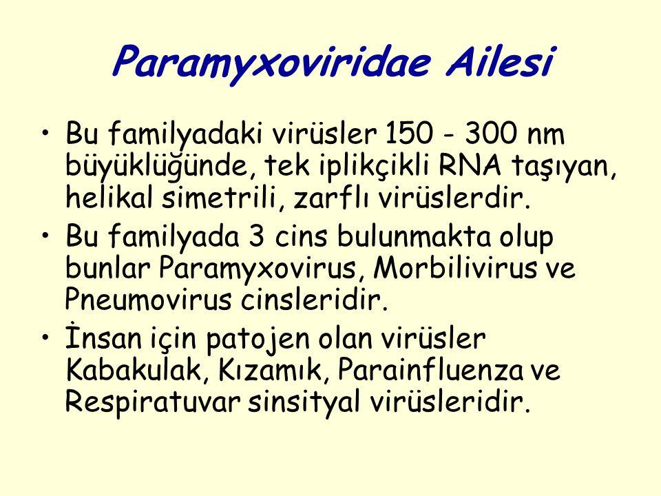 Paramyxoviridae Ailesi Bu familyadaki virüsler 150 - 300 nm büyüklüğünde, tek iplikçikli RNA taşıyan, helikal simetrili, zarflı virüslerdir.