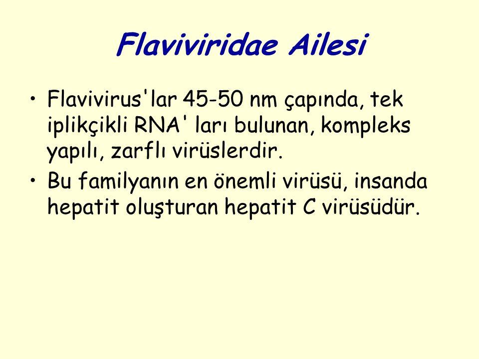 Flaviviridae Ailesi Flavivirus lar 45-50 nm çapında, tek iplikçikli RNA ları bulunan, kompleks yapılı, zarflı virüslerdir.