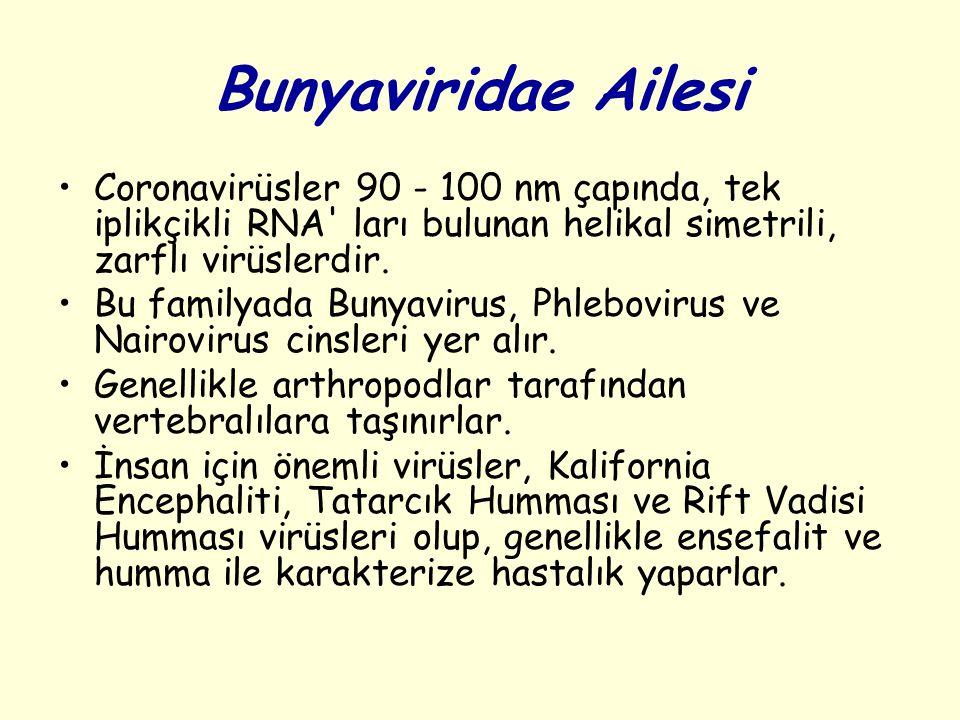 Bunyaviridae Ailesi Coronavirüsler 90 - 100 nm çapında, tek iplikçikli RNA ları bulunan helikal simetrili, zarflı virüslerdir.