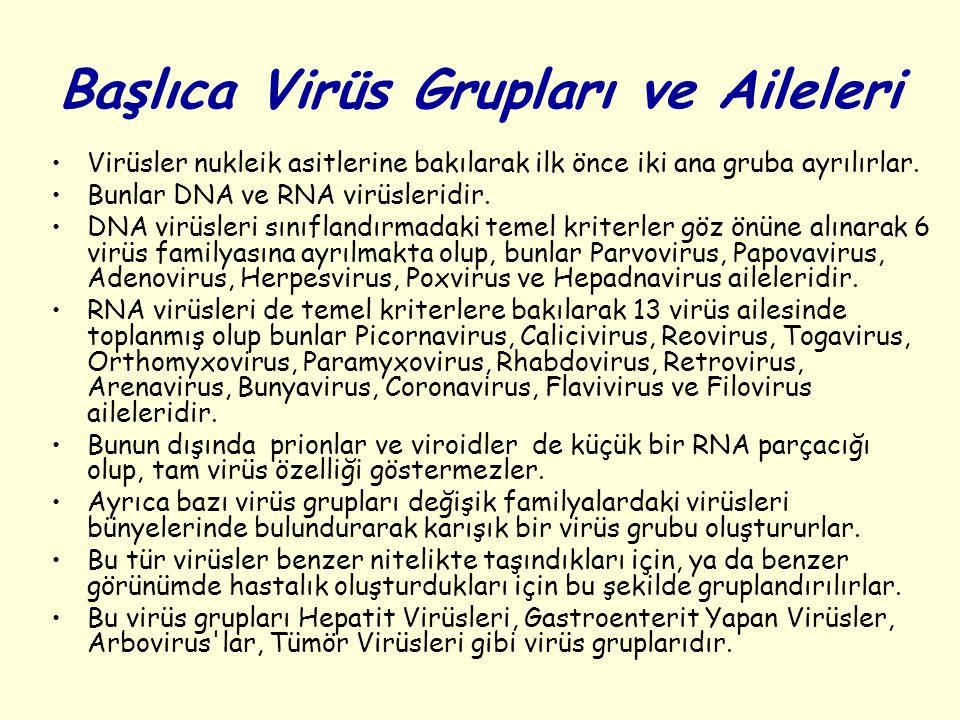 Başlıca Virüs Grupları ve Aileleri Virüsler nukleik asitlerine bakılarak ilk önce iki ana gruba ayrılırlar.