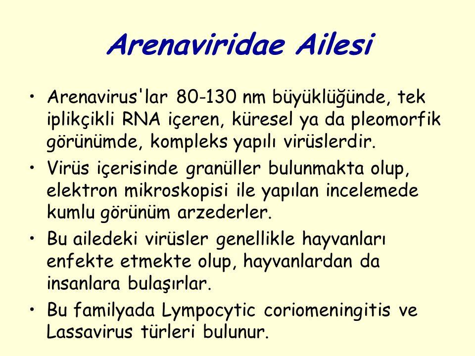 Arenaviridae Ailesi Arenavirus lar 80-130 nm büyüklüğünde, tek iplikçikli RNA içeren, küresel ya da pleomorfik görünümde, kompleks yapılı virüslerdir.