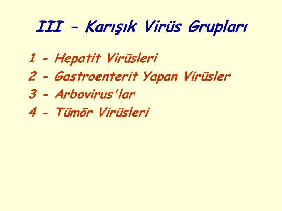 III - Karışık Virüs Grupları 1 - Hepatit Virüsleri 2 - Gastroenterit Yapan Virüsler 3 - Arbovirus lar 4 - Tümör Virüsleri