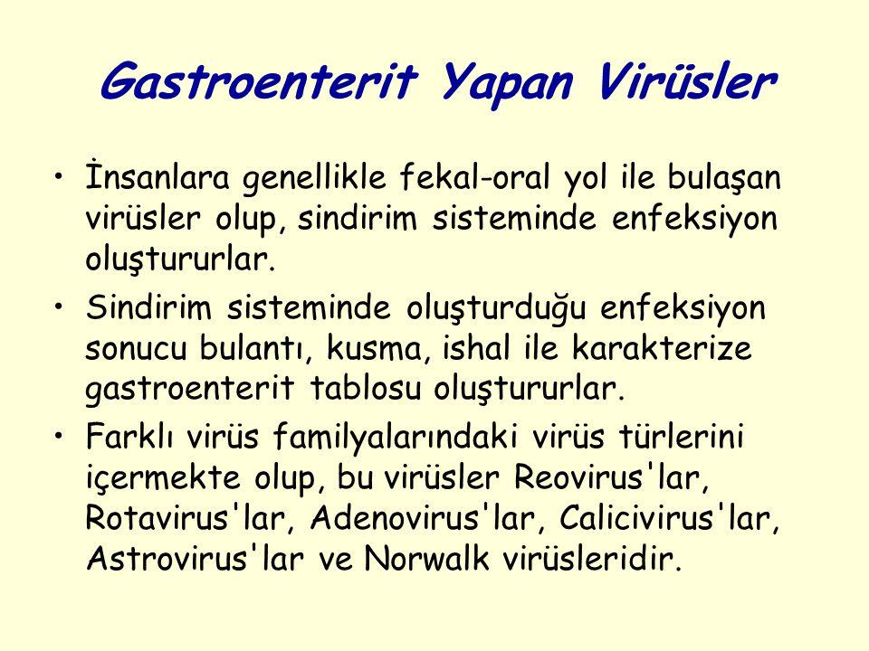 Gastroenterit Yapan Virüsler İnsanlara genellikle fekal-oral yol ile bulaşan virüsler olup, sindirim sisteminde enfeksiyon oluştururlar.