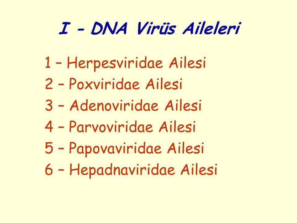 I - DNA Virüs Aileleri 1 – Herpesviridae Ailesi 2 – Poxviridae Ailesi 3 – Adenoviridae Ailesi 4 – Parvoviridae Ailesi 5 – Papovaviridae Ailesi 6 – Hepadnaviridae Ailesi