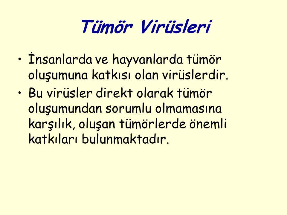 Tümör Virüsleri İnsanlarda ve hayvanlarda tümör oluşumuna katkısı olan virüslerdir.