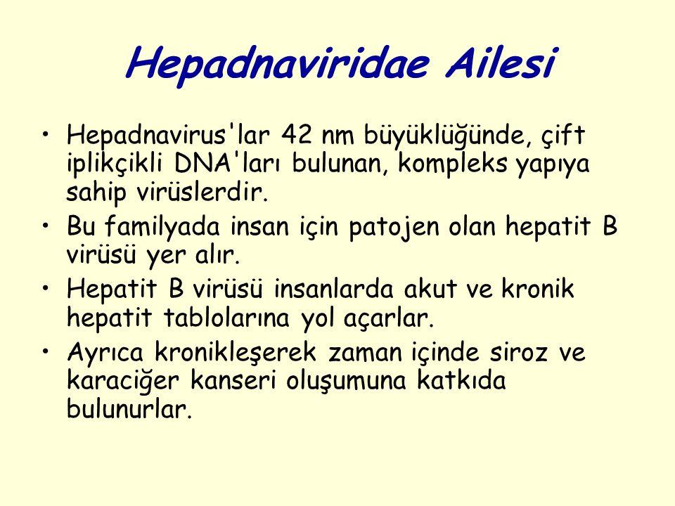 Hepadnaviridae Ailesi Hepadnavirus lar 42 nm büyüklüğünde, çift iplikçikli DNA ları bulunan, kompleks yapıya sahip virüslerdir.