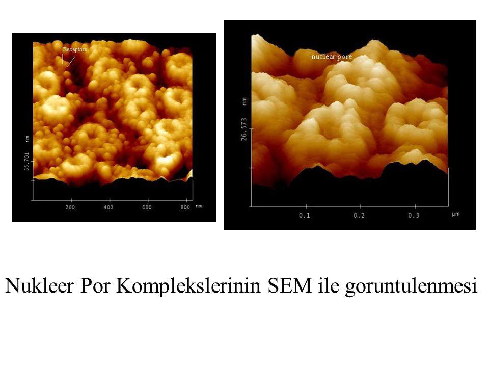 Nukleer Por Kompleksi