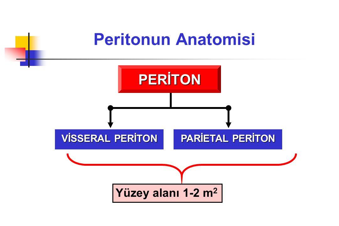 Peritonun Anatomisi PERİTON PARİETAL PERİTON VİSSERAL PERİTON Yüzey alanı 1-2 m 2