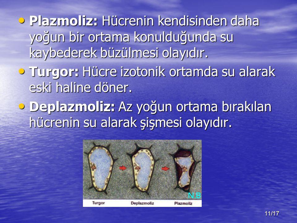 11/17 Plazmoliz: Hücrenin kendisinden daha yoğun bir ortama konulduğunda su kaybederek büzülmesi olayıdır.